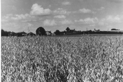 Field-looking-towards-nursery
